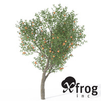 XfrogPlants Peach Tree