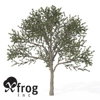 3ds xfrogplants blackthorn tree shrub
