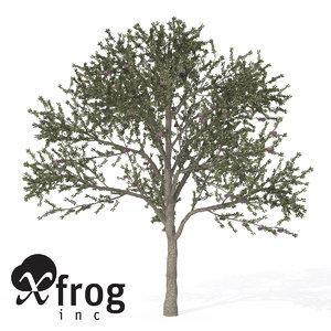 3ds xfrogplants blackthorn tree shrub