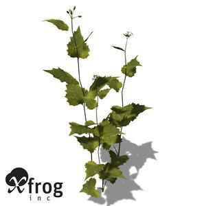 3d model xfrogplants garlic mustard herb
