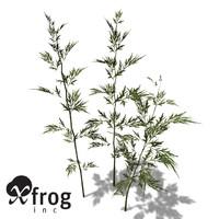 maya xfrogplants mugwort plants