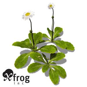 xfrogplants daisy 3d max