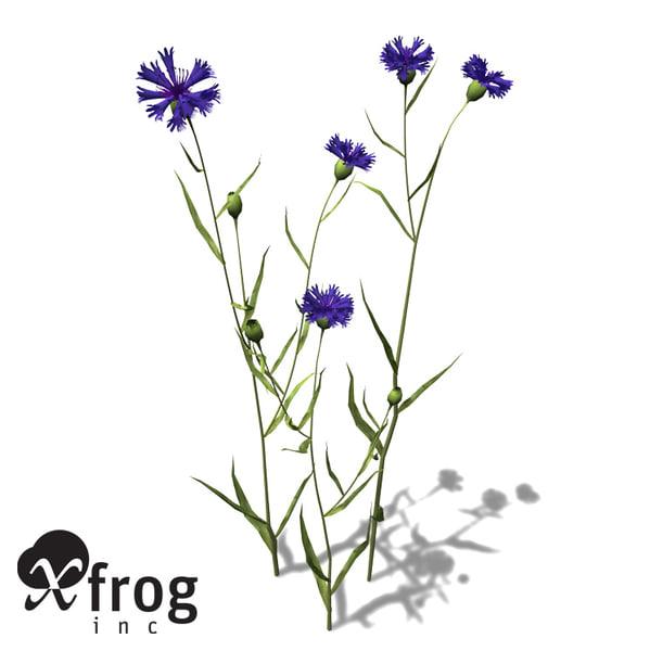 3ds max xfrogplants cornflower plant