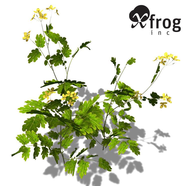 xfrogplants greater celandine plant 3d model