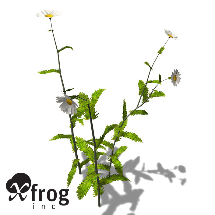 xfrogplants oxeye daisy plant 3ds