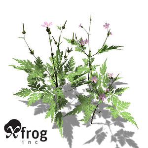 3d 3ds xfrogplants herb robert plant