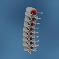 vertebrae human bones 3d model