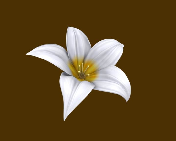 3d flower lilly model