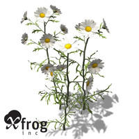 xfrogplants german chamomile herb max