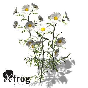 xfrogplants german chamomile herb max