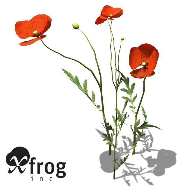 3ds max xfrogplants field poppy plant