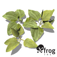 xfrogplants common plantain plant 3d model