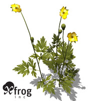 creeping buttercup xfrogplants 3d model