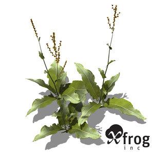 3ds max xfrogplants garden sorrel plant
