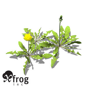 3d xfrogplants dandelion plant
