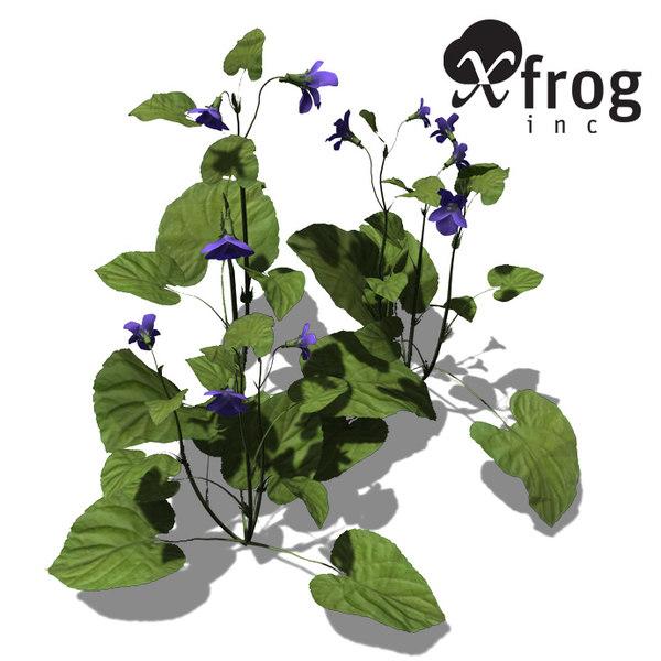 3d model xfrogplants pansy plants