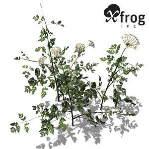 xfrogplants anthriscus sylvestris plant 3ds