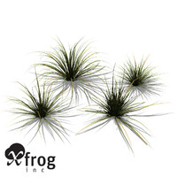 xfrogplants carex spec plant 3d 3ds