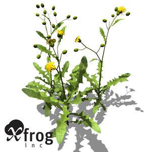 xfrogplants crepis biennis plant 3d model