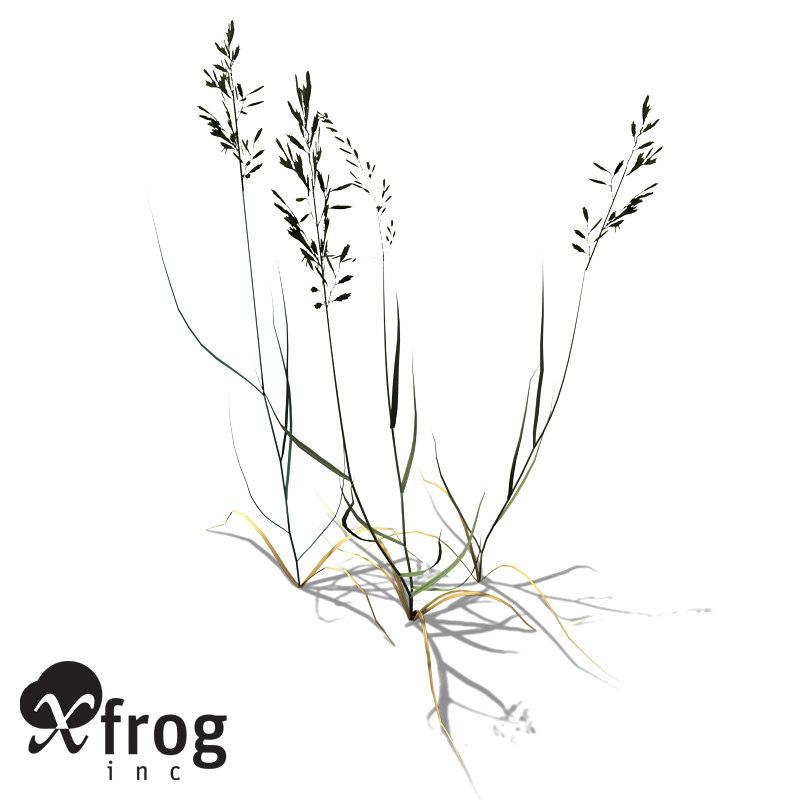 3ds xfrogplants festuca ovina plant