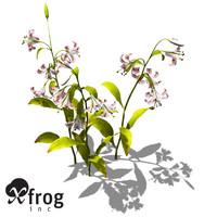 XfrogPlants Lilium lancifolium