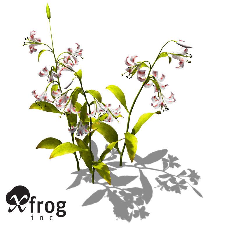 3dsmax xfrogplants lilium lancifolium plant