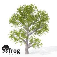 3dsmax xfrogplants montpellier maple tree