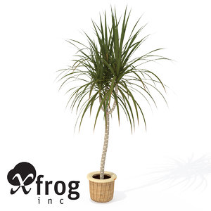 red-edge dracaena plant 3d model