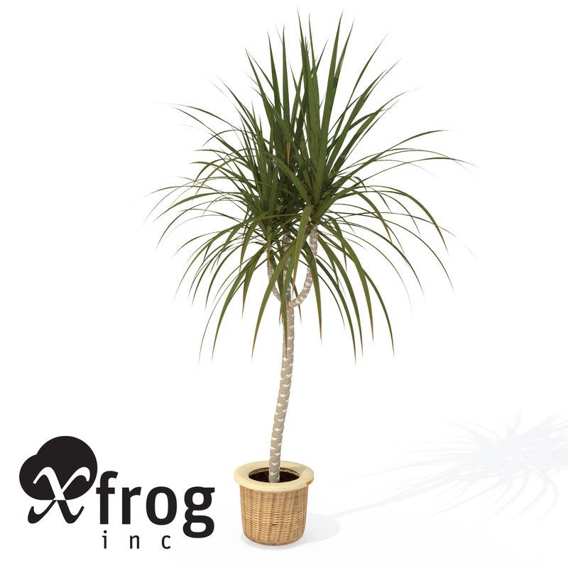 red-edge dracaena plant 3d model