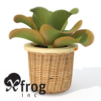 xfrogplants kalanchoe plant 3d obj