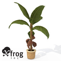 XfrogPlants Banana Plant HP