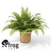 fishbone fern plant 3d model