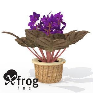3d lwo xfrogplants african violet plant
