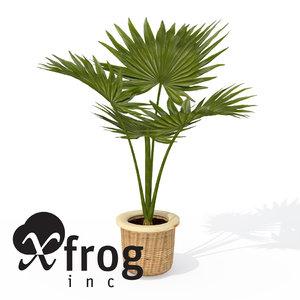 3d model xfrogplants miniature chusan palm