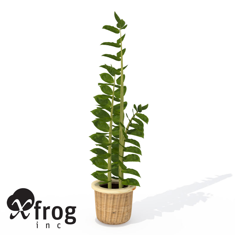 aroid palm plant 3d model