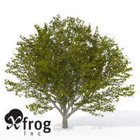 xfrogplants nikko maple tree 3d 3ds