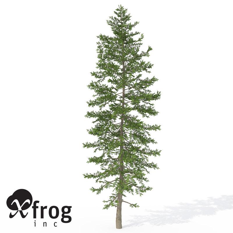max xfrogplants nikko fir tree