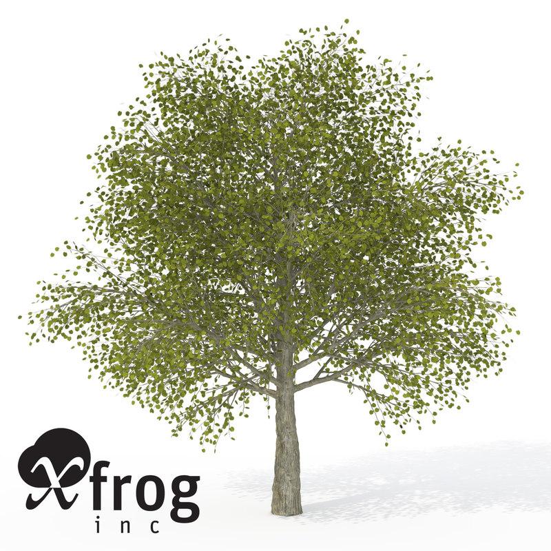 xfrogplants katsura tree 3d model