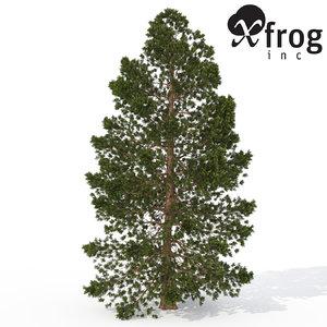 max xfrogplants hinoki falsecypress tree