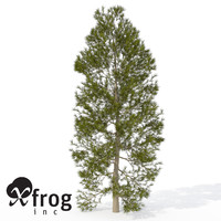 3d xfrogplants japanese cedar tree