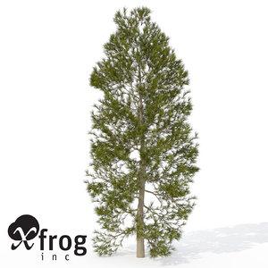 3d xfrogplants japanese cedar tree