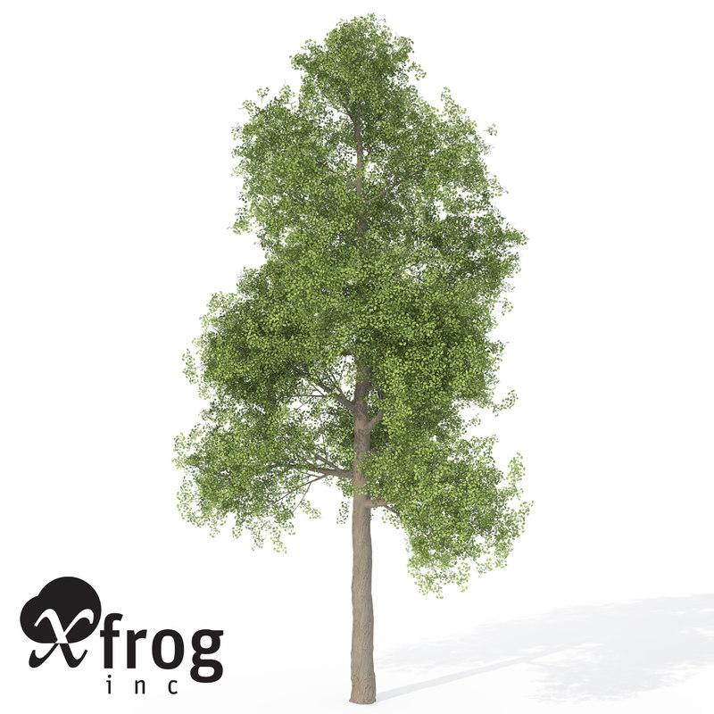 xfrogplants ginkgo tree 3d model