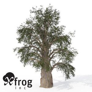 temple juniper tree 3d model