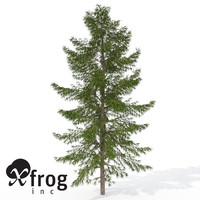 3ds max xfrogplants japanese white larch