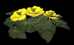 flower begonia yellow 3d model