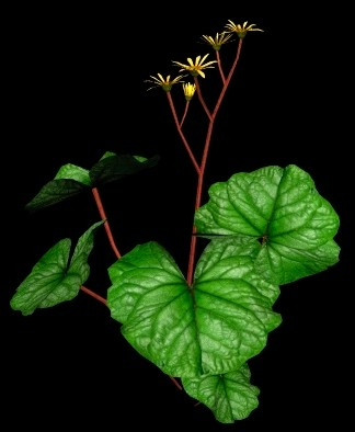 flower big leaf golden 3d 3ds