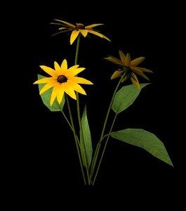 3d flower black eyed susan model