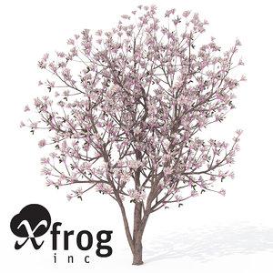 xfrogplants saucer magnolia x 3ds