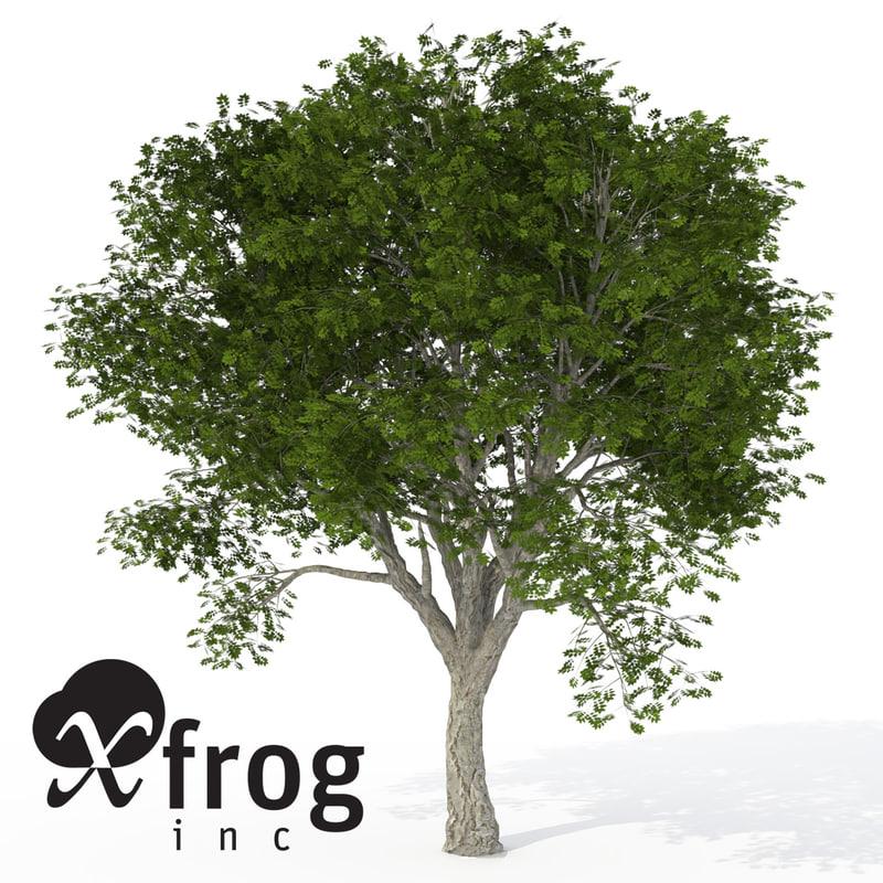 xfrogplants amur corktree tree 3d c4d