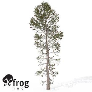 3dsmax xfrogplants japanese white pine